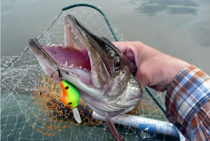 когда начинается рыбалка на блесну
