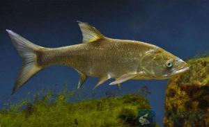 рыбалка на жереха