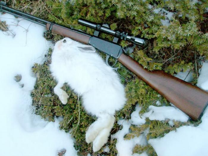 оружие на зайца