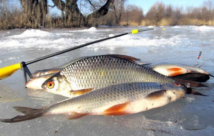 Зимняя_рыбалка_плотвы