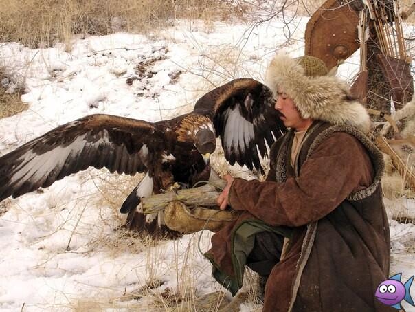охота с ловчими птицами