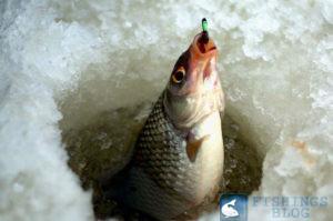 зимняя ловля плотвы