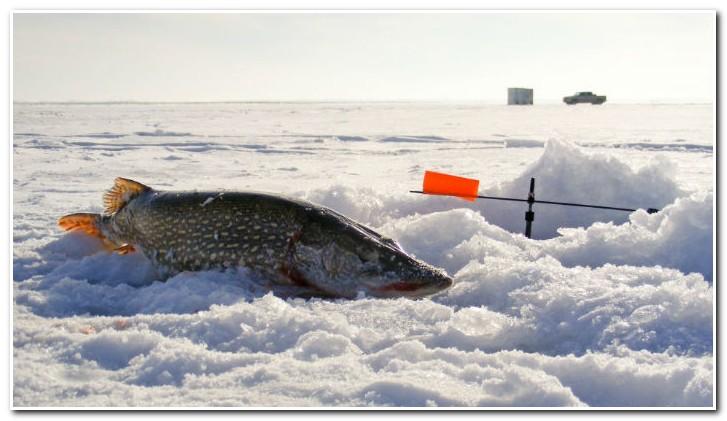 ловля щуки по последнему льду
