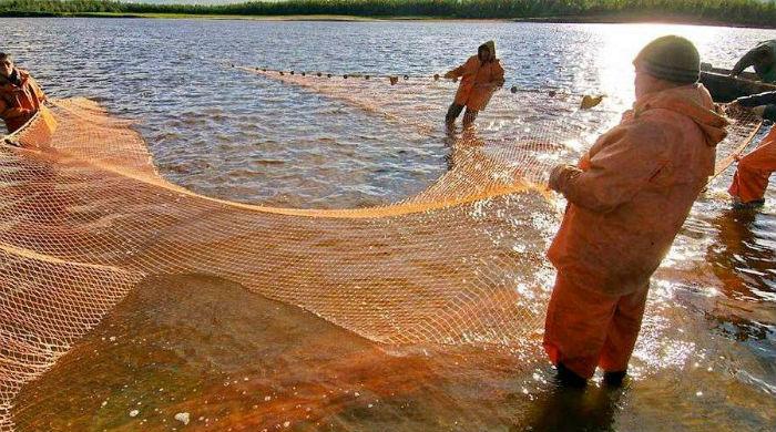 рыбаки заносят невод