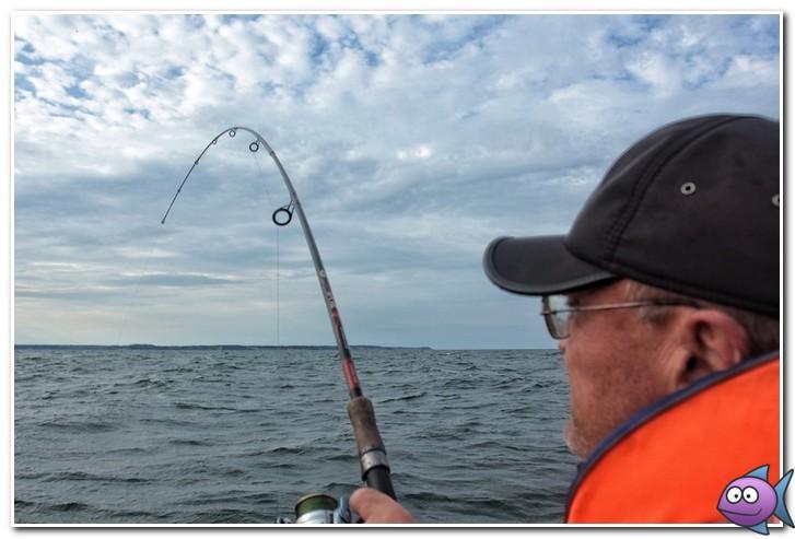 ловля камбалы в балтийском море
