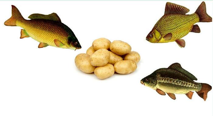 ловля на картошку