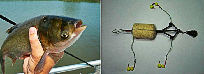 Ловля толстолоба на планктон