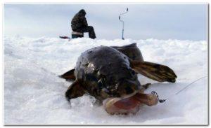 ловля сома зимой