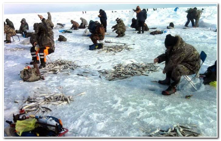 Зимняя_рыбалка_ловля_корюшки