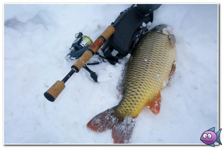 снасти для ловли карпа зимой
