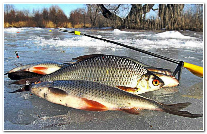 Зимняя_рыбалка_сороги