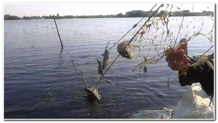 Сети для ловли рыбы