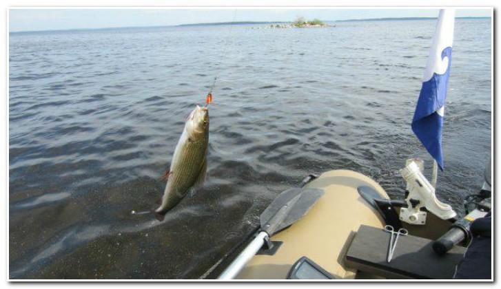 ловля сига с лодки