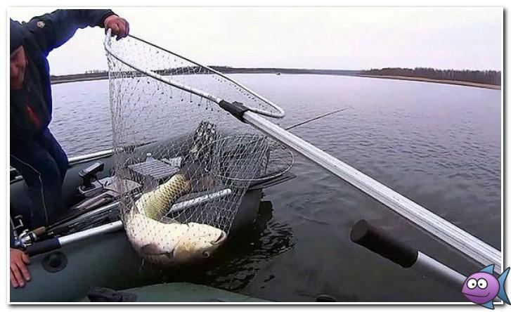 как поймать белого амура