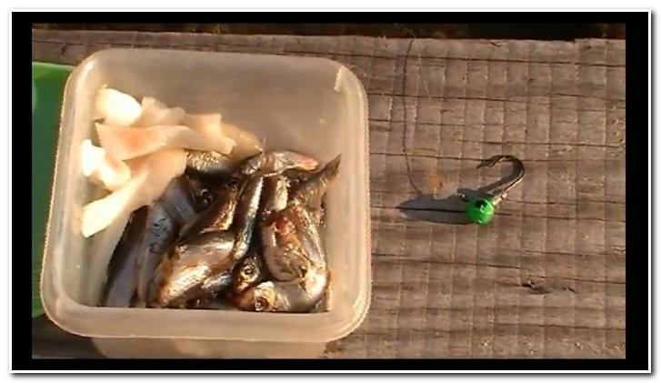 ловля скорпены на куски рыбы