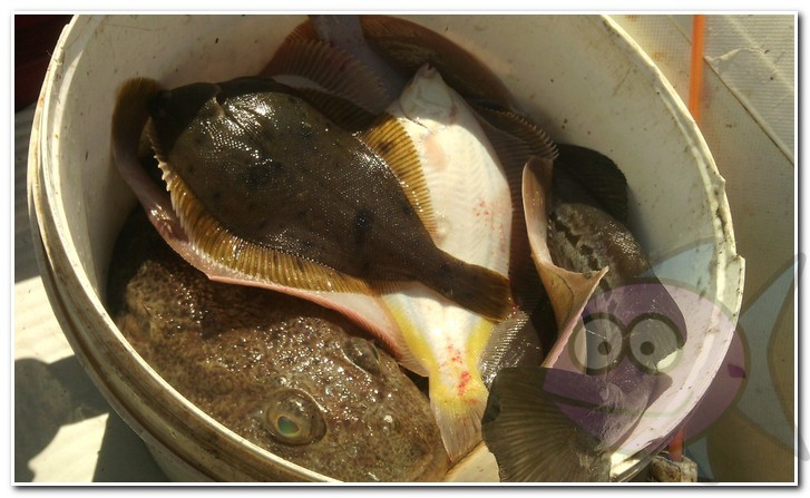 ловля камбалы на кальмара