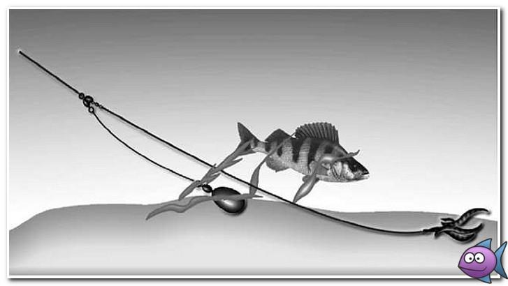 Как ловить окуня на спиннинг и на какие снасти