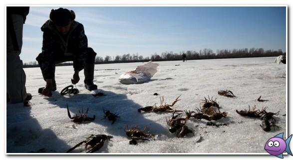 ловим раков в январе