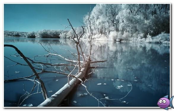 ловля карася в январе