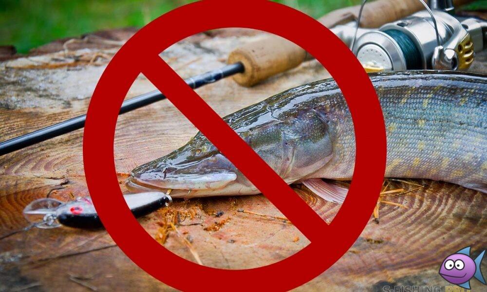 Незаконная рыбалка: новые штрафы и наказания за лов рыбы