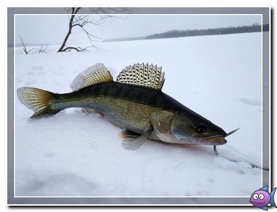 lovlya-sudaka-zimoj