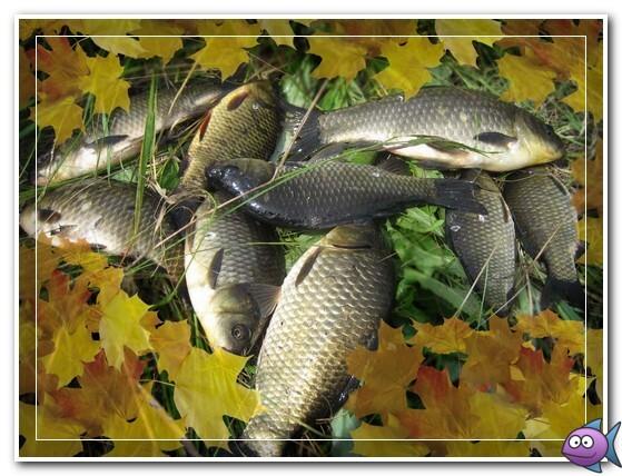 ловля карася в октябре