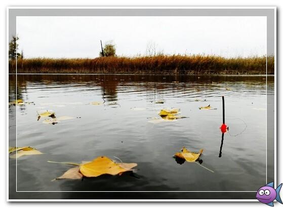 поплавок в ноябре